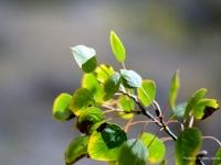tree_branch